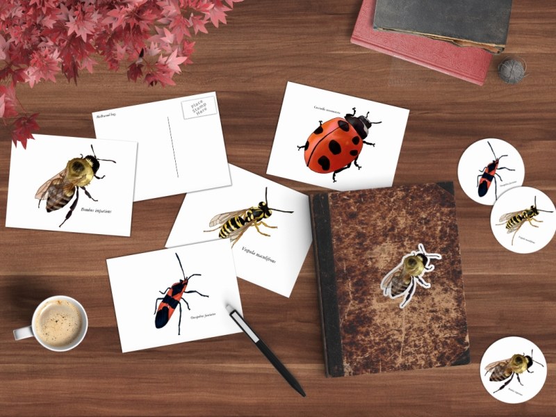 insects header