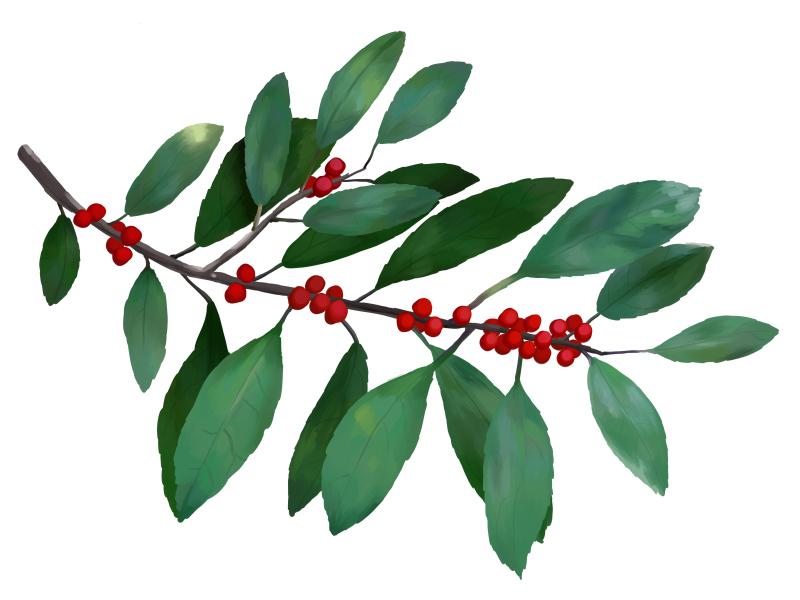 winterberry branch