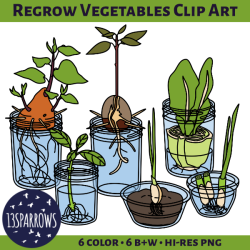 regrow vegetables clip art tpt preview