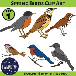 spring birds clip art 1 tpt preview