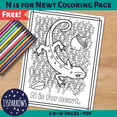 n newt coloring page tpt freebie.