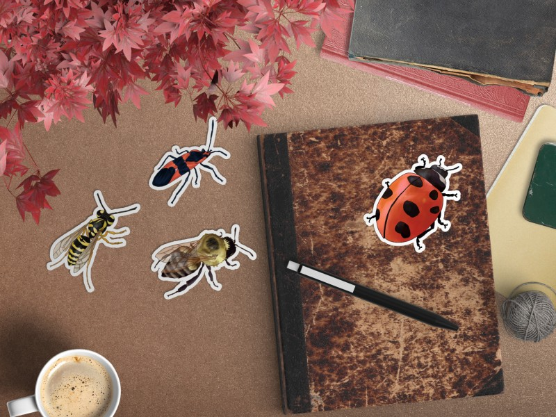 native insects header