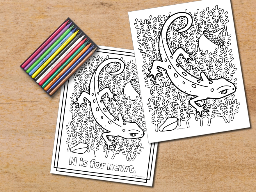 newt coloring page
