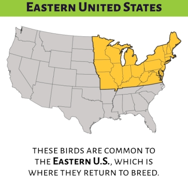 A product description preview. Headline: Eastern United States. Caption: These birds are common to the Eastern U.S., which is where they return to breed. Showing an illustrated map of the mainland United States in grey with the Eastern states, from Missouri to Maine, highlighted in yellow. 13sparrows